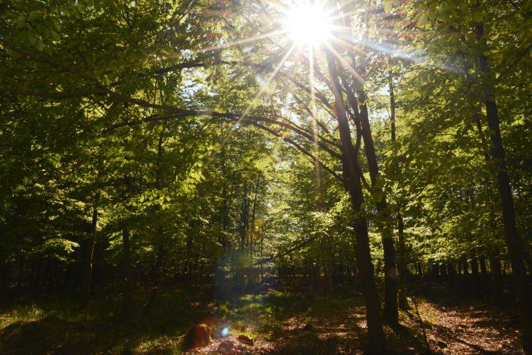 Der Wald von Schmidtheim
